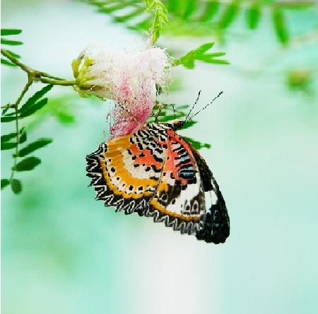 עיצוב של גינת פרפרים