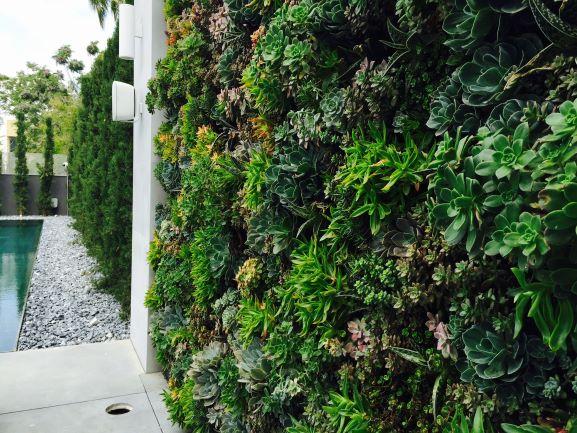 קיר ירוק צמחיה